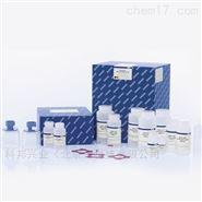 EndoFree质粒Maxi纯化试剂盒(10T)
