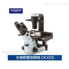 奥林巴斯倒置生物显微镜