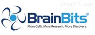 Brainbits国内授权代理