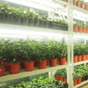 植物培养架