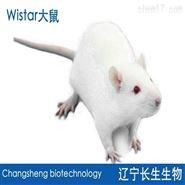 Wistar大鼠