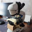 CX23和cx33奥林巴斯生物显微镜