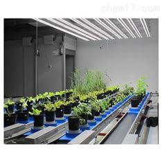 高通量植物表型成像分析平台(传送带式)
