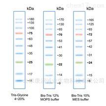 Direct-load 彩色预染蛋白Marker
