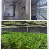 番茄/烟草/油菜生长室