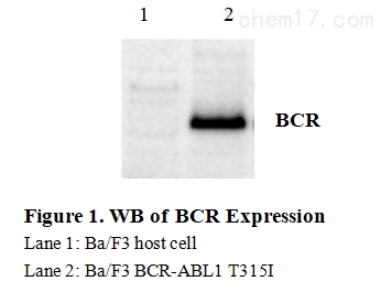 CBP73190 WB.jpg