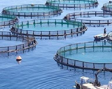 水产养殖水质在线监测系统
